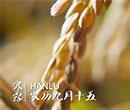 青岛新东方舌尖上的24节气--寒露篇